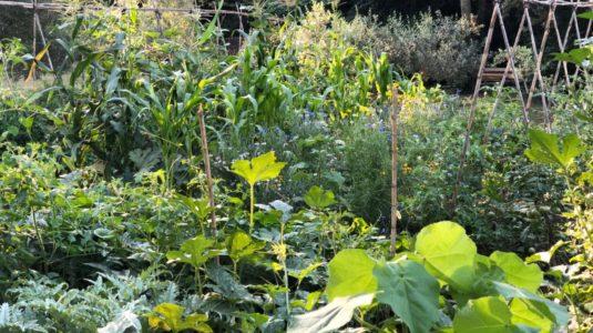 organic vegetable garden, Cabane de la leque gite de Charme in the Alpilles.