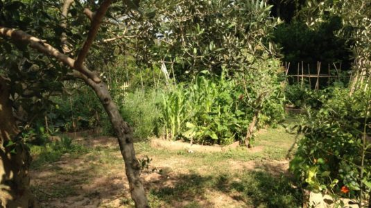 Organic vegetable garden of the hut of la leque, Rural cottage in Provence in Fontvieille
