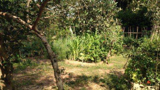 Potager bio de la cabane de la leque, Gite rural en Provence à Fontvieille